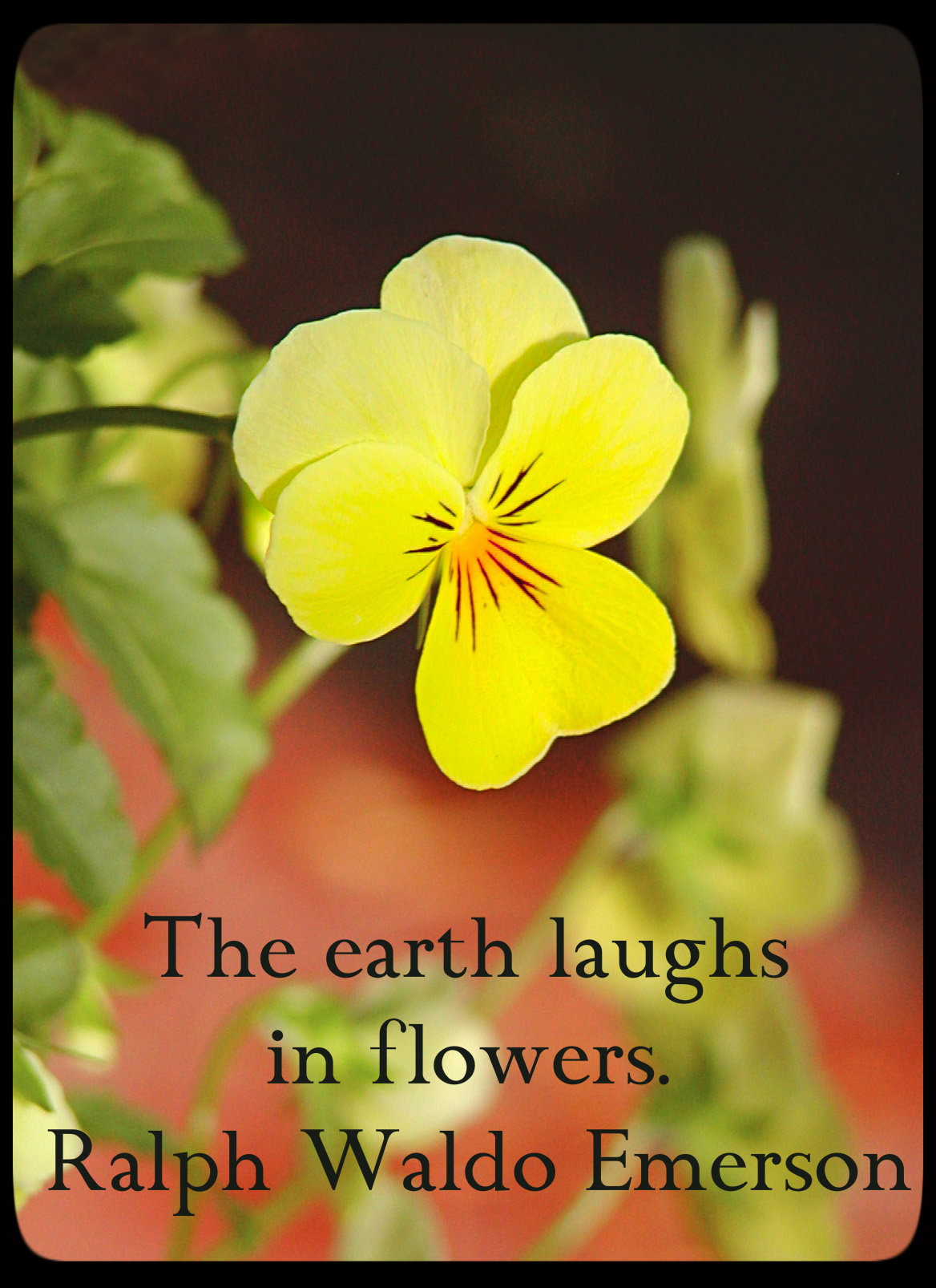 The earth laughs in flowers. ~Ralph Waldo Emerson