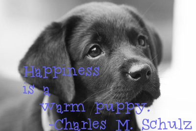 """Happiness is a warm puppy.""  -Charles M. Schulz"